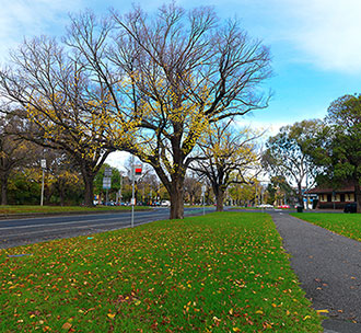 melbourne leafy street